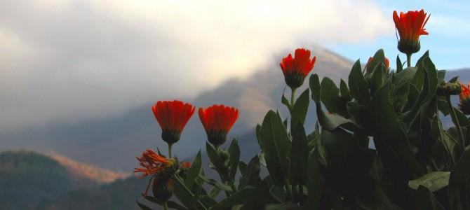5 meilleures plantes médicinales pour un jardin