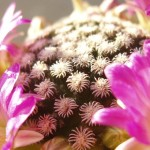 Les plantes savent prendre soin de leur progéniture