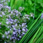 Herbes aromatiques, 3 bonnes raisons de les manger