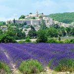 Comment cueillir les herbes de la Saint-Jean