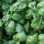 Le basilic l'ami aromatique de notre estomac