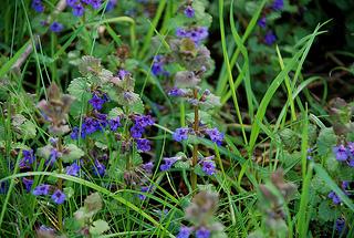 7 plantes et herbes sacrées de la Saint Jean et leurs bienfaits