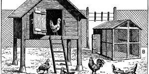 poulailler 1 300x150 - Comment élever des poules pondeuses pour avoir des œufs frais