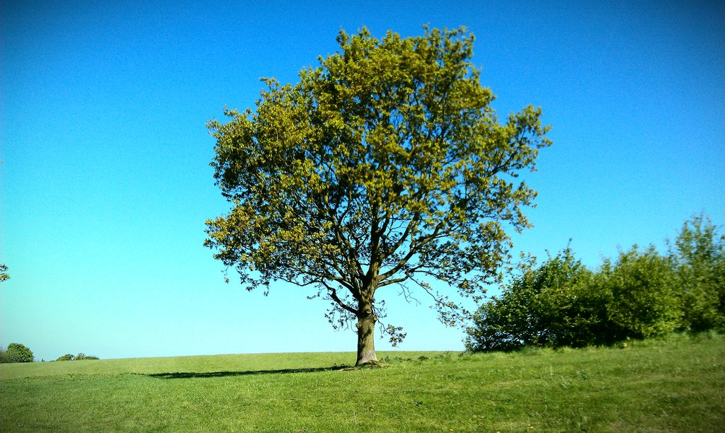a beautiful tree - Pour maîtriser vos émissions de CO², plantez un arbre!