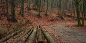 4 actions pour lutter contre la déforestation dans le monde
