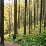 saccage,forêt,deforestation,déforestation,planter,