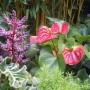 plante intérieur air maison santé pollution choix feng shui