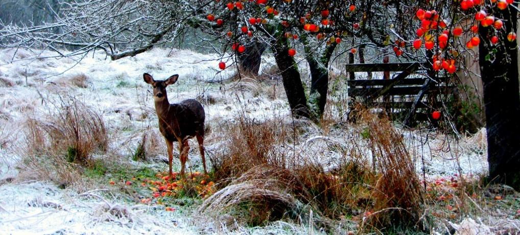 7 recettes qui ont fait leurs preuves pour votre santé en hiver