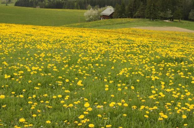 5 meilleures plantes médicinales à cultiver dans votre jardin