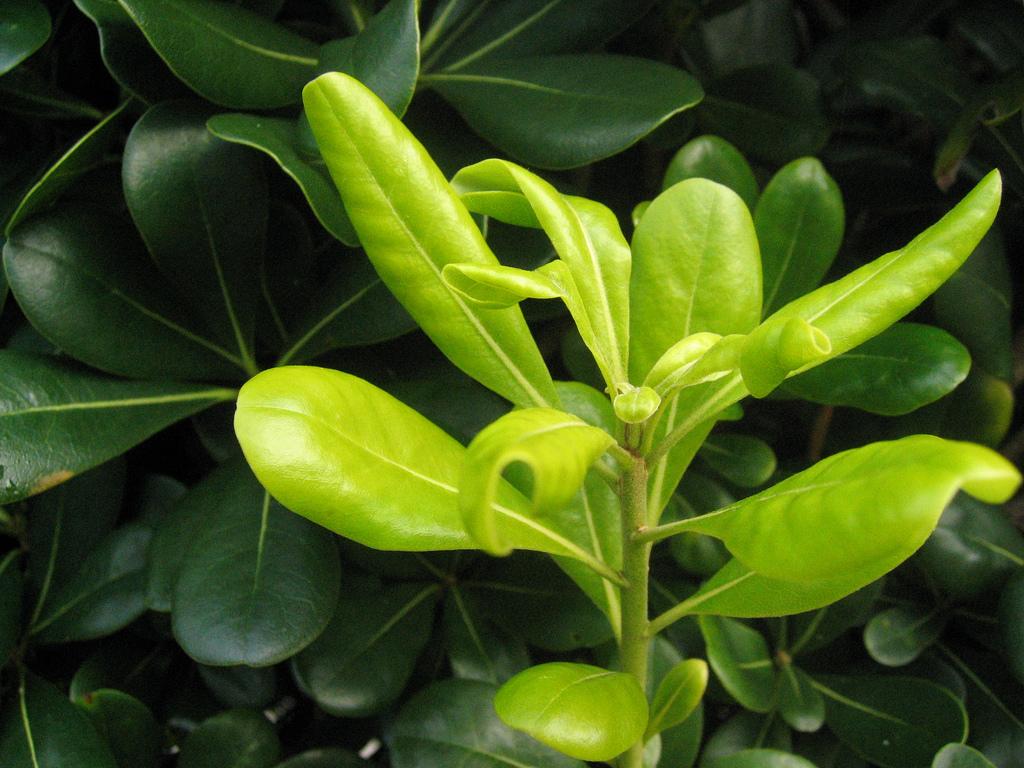 Les plantes savent aussi prendre soin de leurs progénitures
