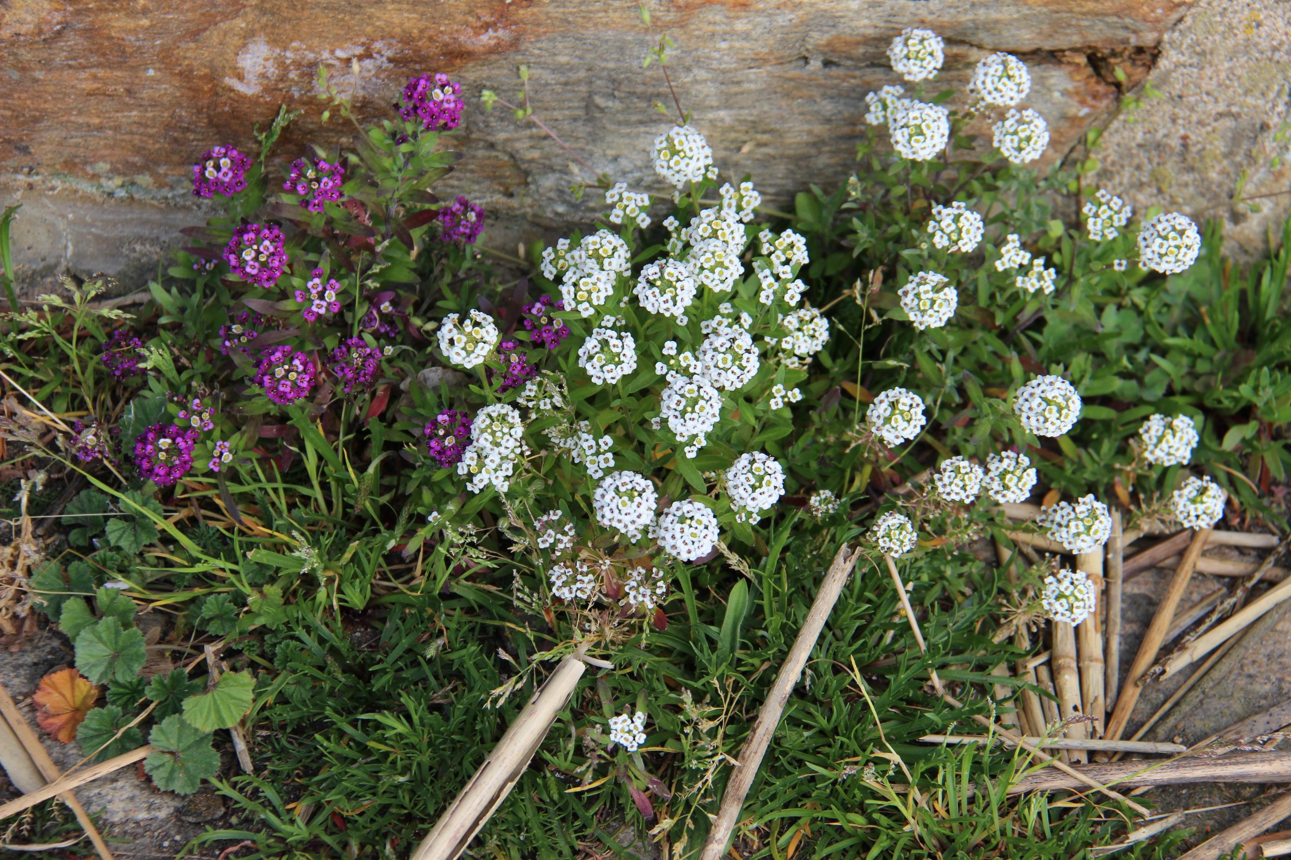 5 plantes lutter fatigue - 5 plantes pour lutter contre le coup de fatigue et le stress