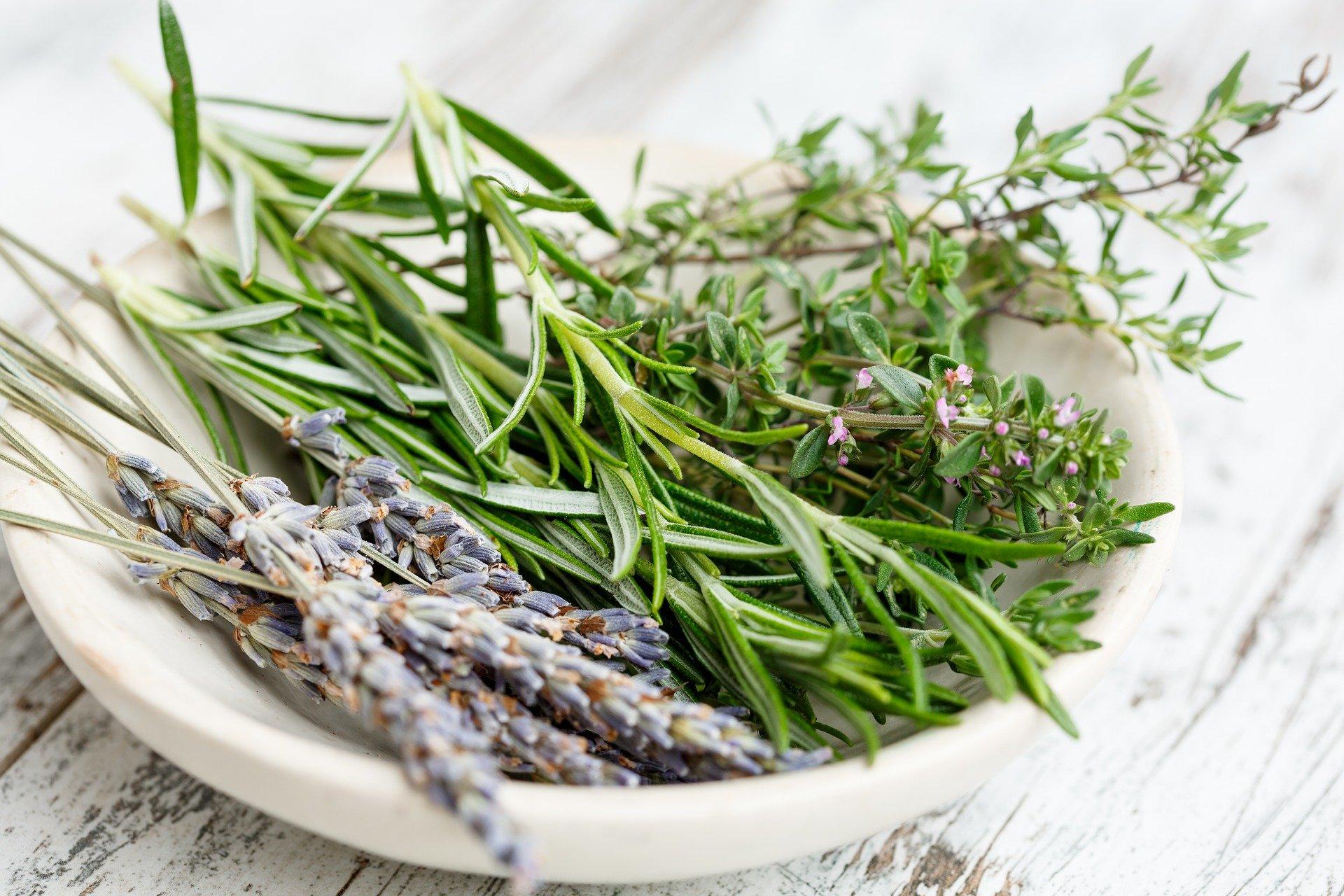 5 meilleures plantes pour lutter contre le diabète de type2