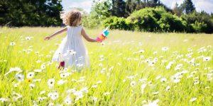 La Marguerite - une herbe de Saint-Jean aux multiples bienfaits