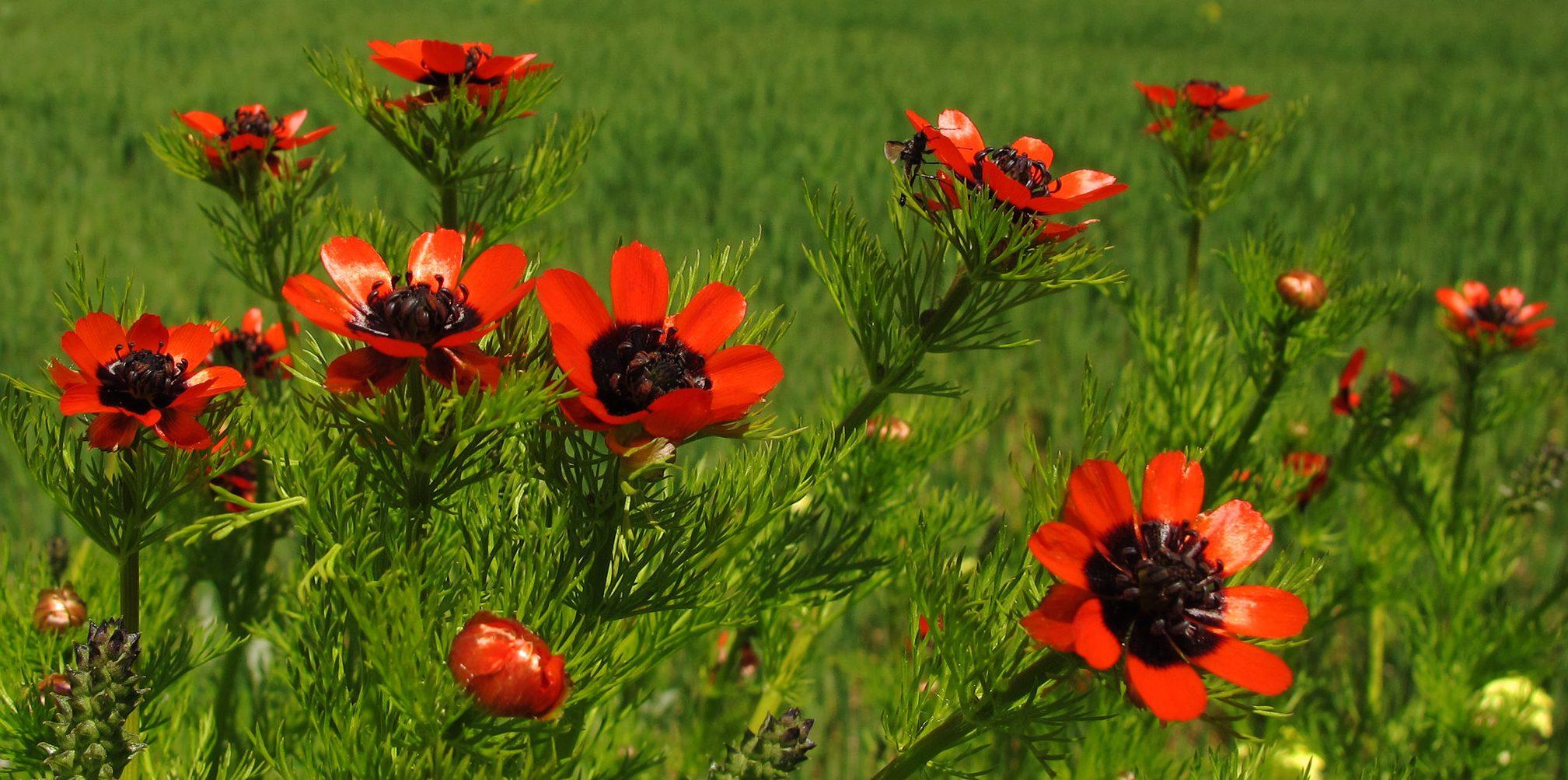 Savoir utiliser les plantes médicinales # Plantes Cours 1