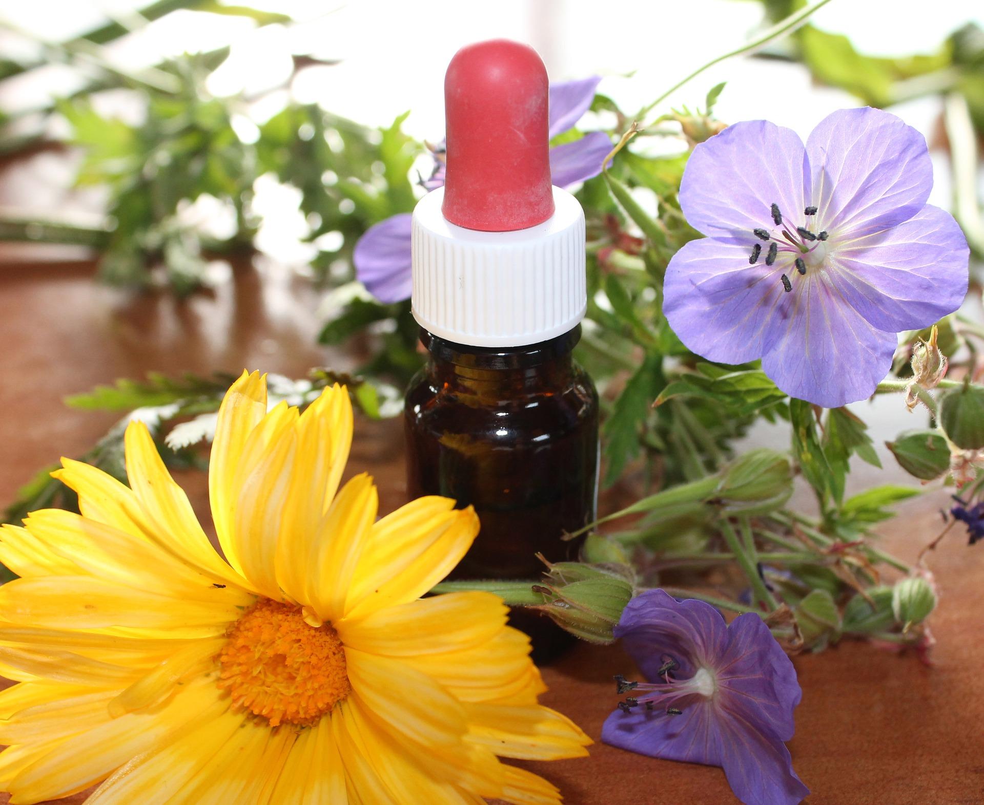 Plantes - Savoir utiliser les plantes médicinales - cours 1