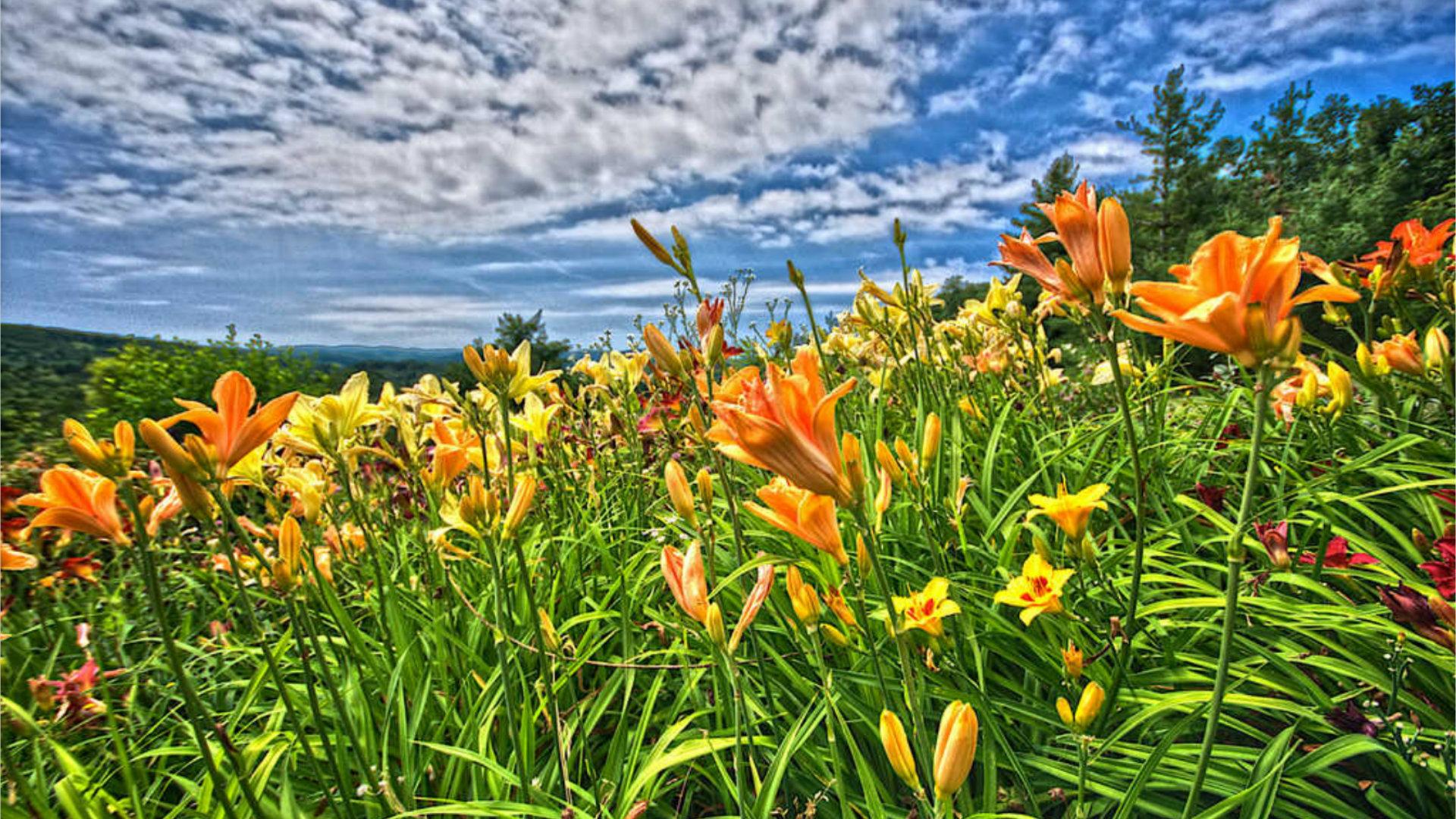 #Plantes Cours 2 - Remèdes : Savoir utiliser les plantes médicinales