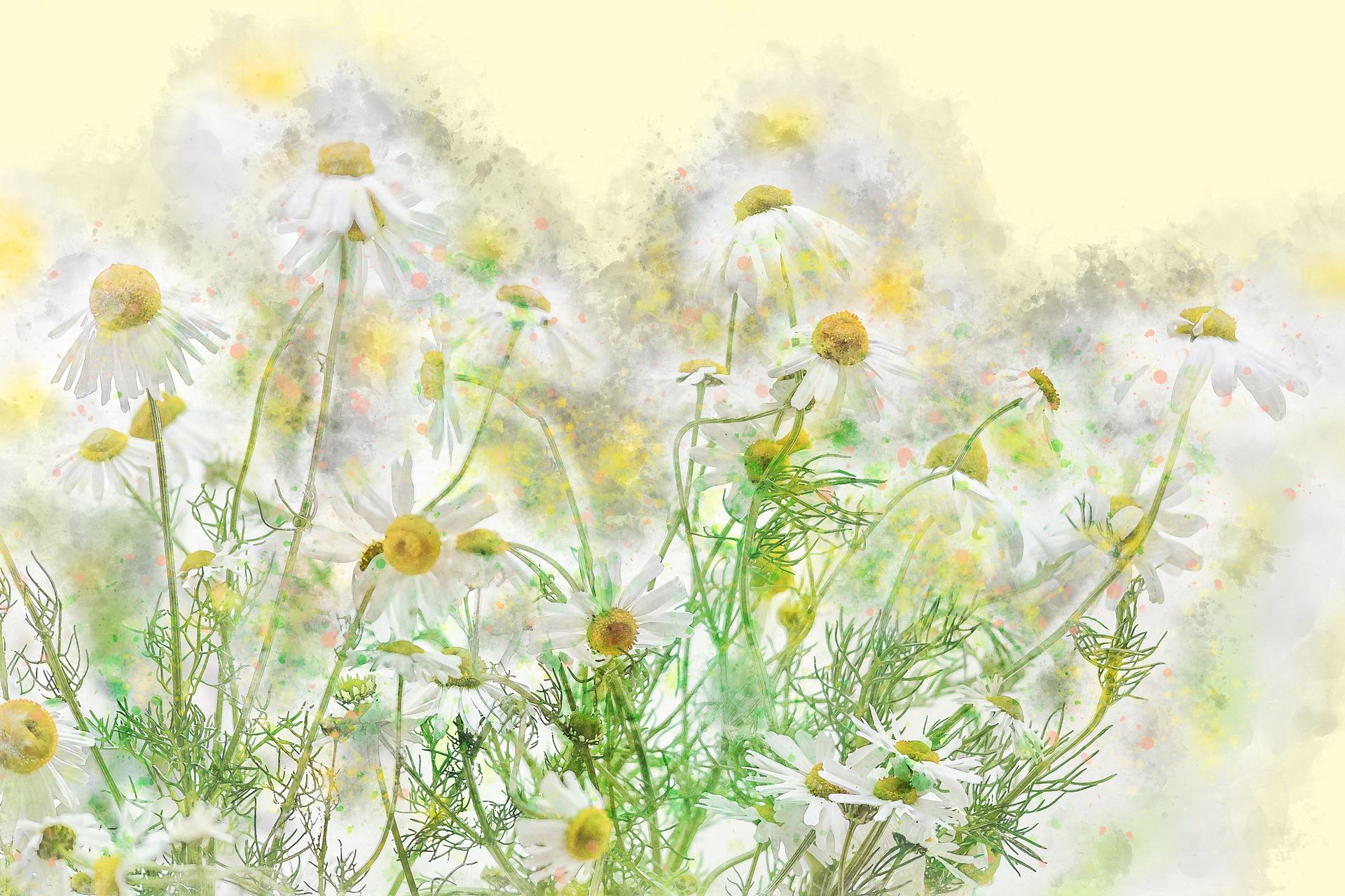Remèdes : Savoir utiliser les plantes médicinales - Cours 2