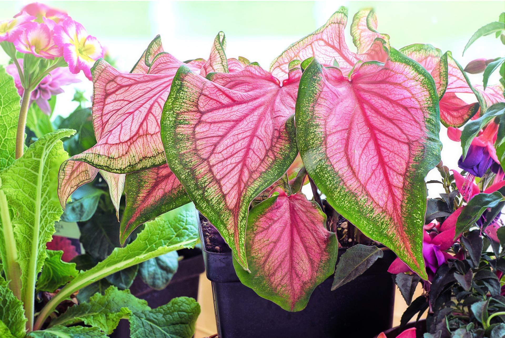 plantes interieure plant 3381317 1920 - Canicule : 9 plantes qui garderont l'air frais dans votre maison