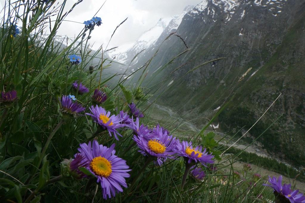 Plantes sauvages médicinales à cueillir en balade à la campagne.